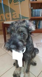 Archer almost 4 months